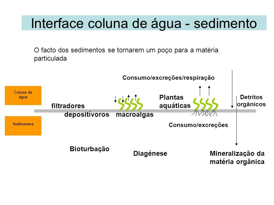 Interface coluna de água - sedimento