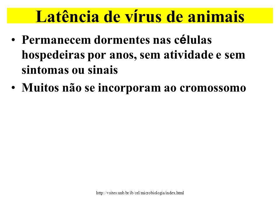 Latência de vírus de animais