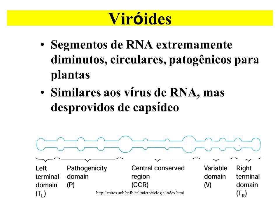 Viróides Segmentos de RNA extremamente diminutos, circulares, patogênicos para plantas. Similares aos vírus de RNA, mas desprovidos de capsídeo.