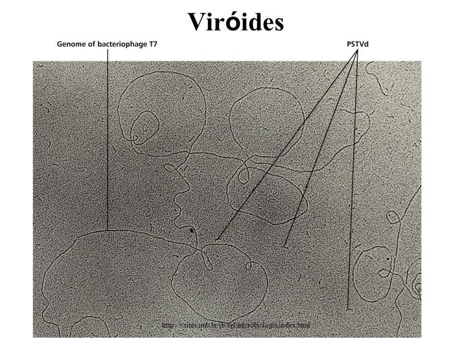 Viróides http://vsites.unb.br/ib/cel/microbiologia/index.html