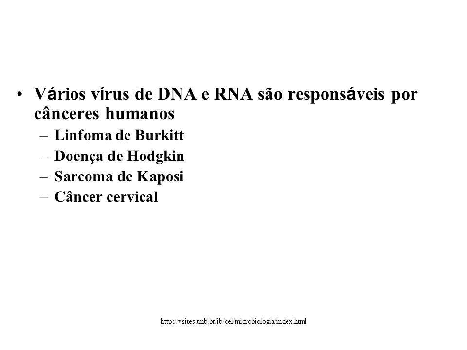 Vários vírus de DNA e RNA são responsáveis por cânceres humanos