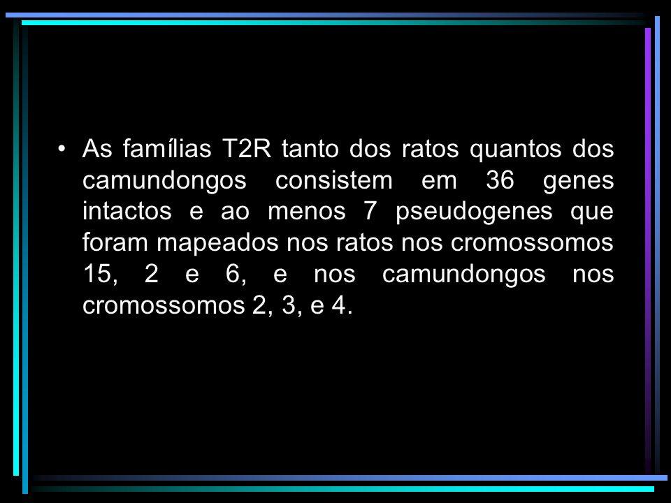 As famílias T2R tanto dos ratos quantos dos camundongos consistem em 36 genes intactos e ao menos 7 pseudogenes que foram mapeados nos ratos nos cromossomos 15, 2 e 6, e nos camundongos nos cromossomos 2, 3, e 4.