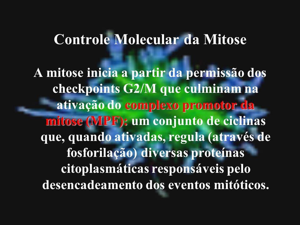 Controle Molecular da Mitose