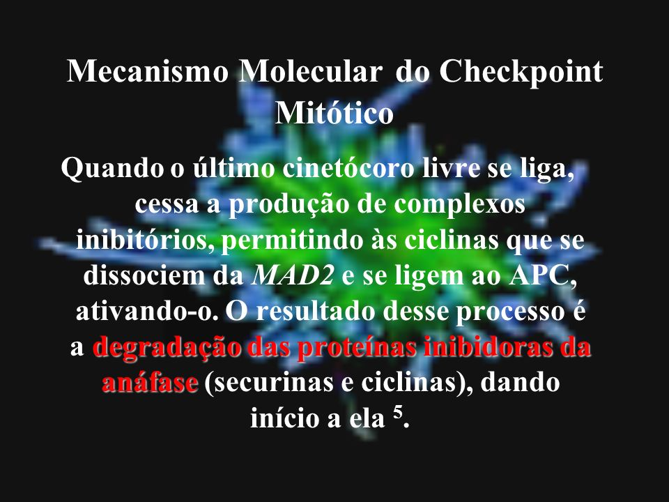 Mecanismo Molecular do Checkpoint Mitótico