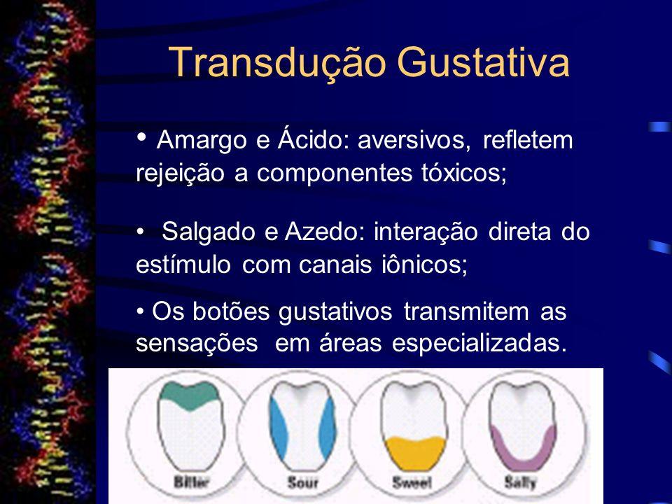 Transdução Gustativa Amargo e Ácido: aversivos, refletem rejeição a componentes tóxicos;
