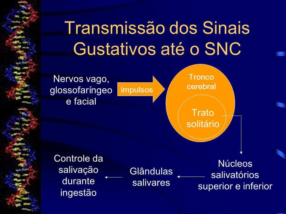 Transmissão dos Sinais Gustativos até o SNC