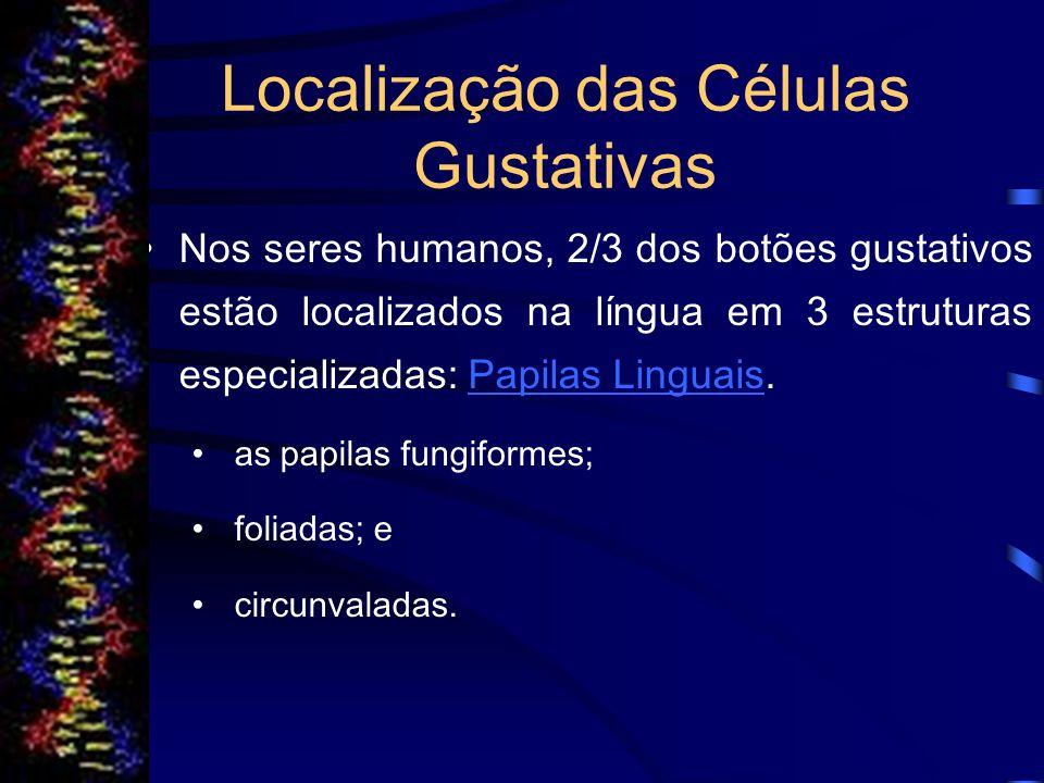 Localização das Células Gustativas