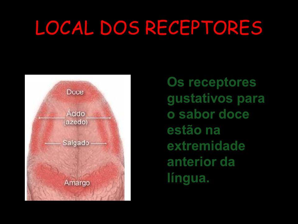 LOCAL DOS RECEPTORESOs receptores gustativos para o sabor doce estão na extremidade anterior da língua.
