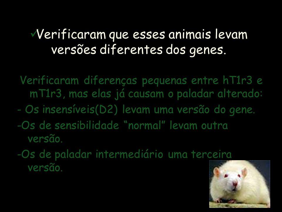 Verificaram que esses animais levam versões diferentes dos genes