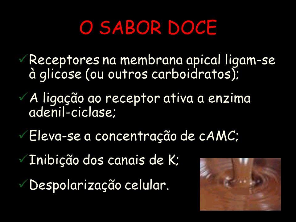 O SABOR DOCE Receptores na membrana apical ligam-se à glicose (ou outros carboidratos); A ligação ao receptor ativa a enzima adenil-ciclase;