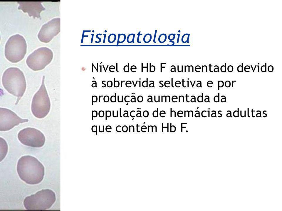 Fisiopatologia Nível de Hb F aumentado devido à sobrevida seletiva e por produção aumentada da população de hemácias adultas que contém Hb F.