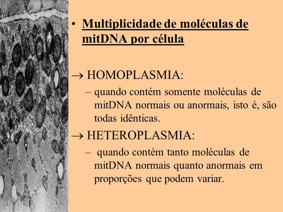 Multiplicidade de moléculas de mitDNA por célula