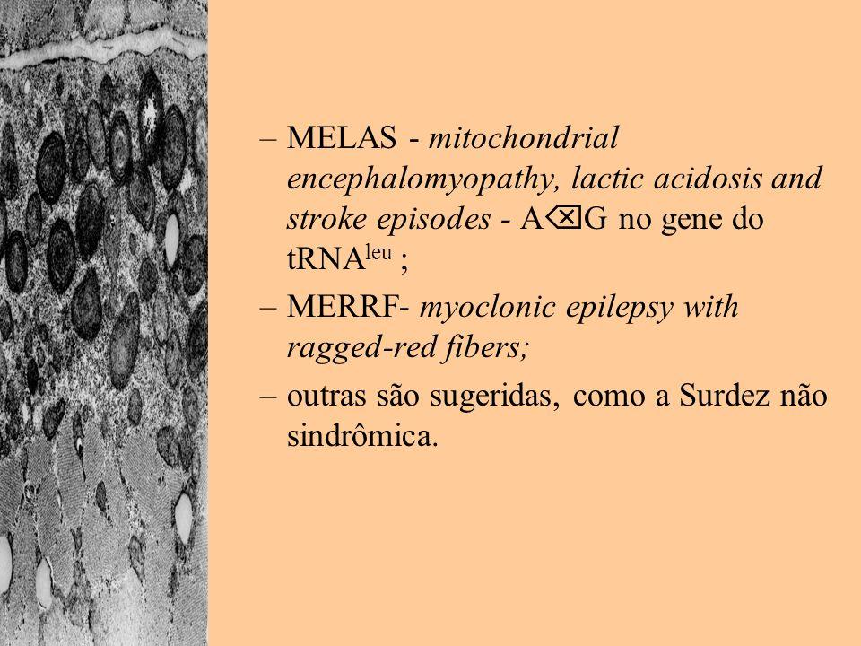 MELAS - mitochondrial encephalomyopathy, lactic acidosis and stroke episodes - AG no gene do tRNAleu ;