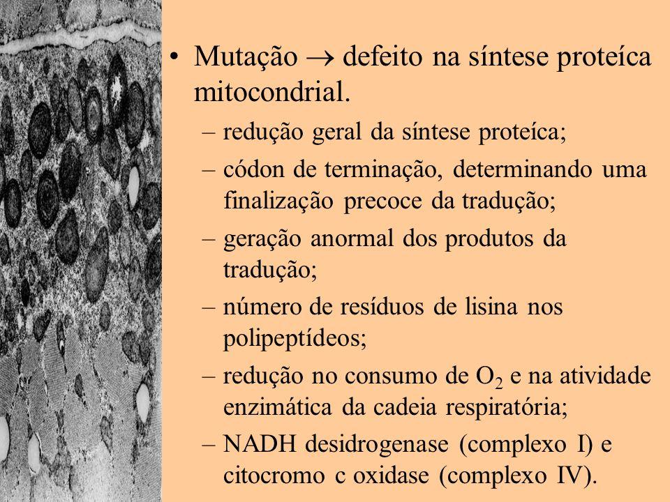 Mutação  defeito na síntese proteíca mitocondrial.