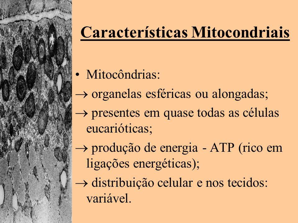 Características Mitocondriais