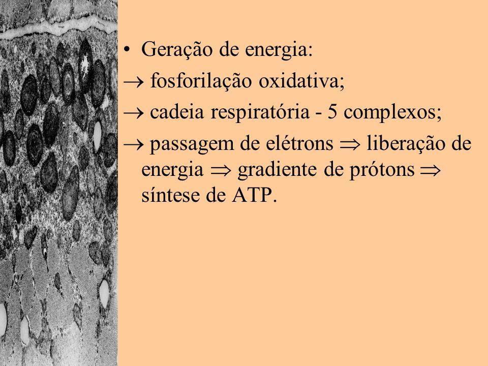 Geração de energia:  fosforilação oxidativa;  cadeia respiratória - 5 complexos;