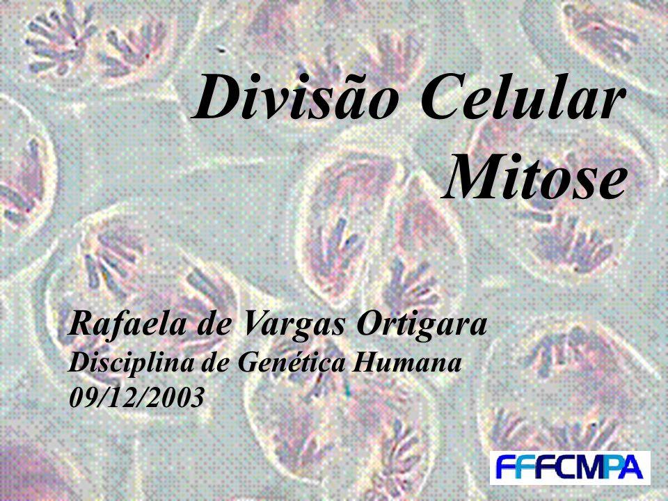 Divisão Celular Mitose Rafaela de Vargas Ortigara