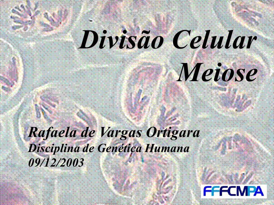 Divisão Celular Meiose Rafaela de Vargas Ortigara