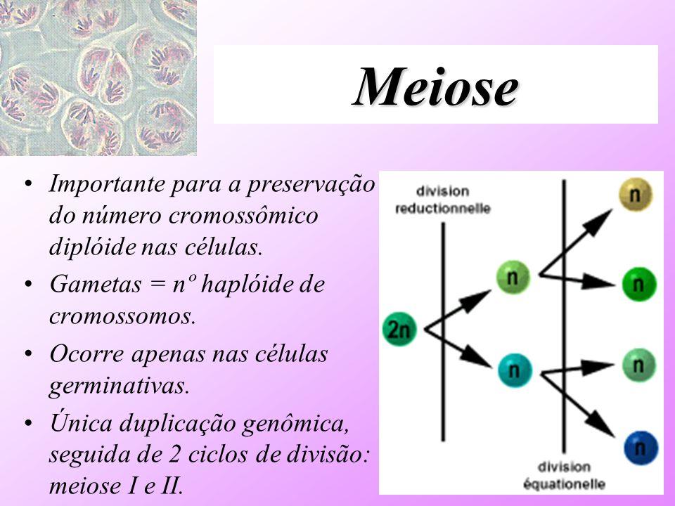 Meiose Importante para a preservação do número cromossômico diplóide nas células. Gametas = nº haplóide de cromossomos.