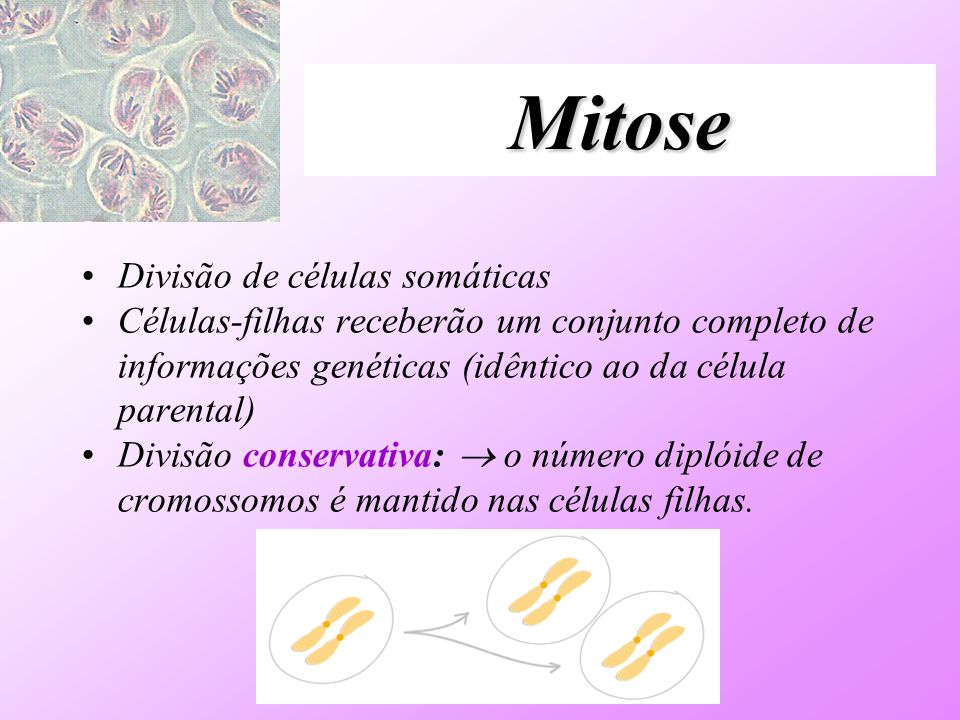 Mitose Divisão de células somáticas