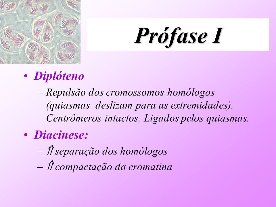 Prófase I Diplóteno Diacinese: