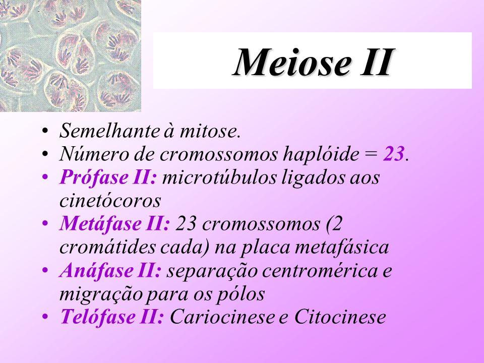 Meiose II Semelhante à mitose. Número de cromossomos haplóide = 23.