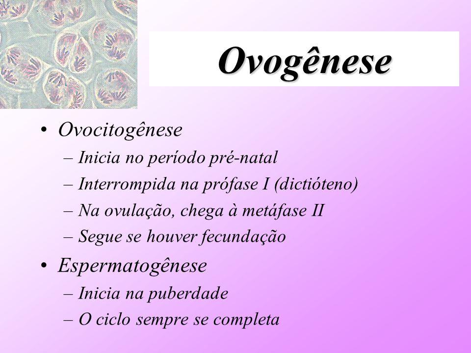 Ovogênese Ovocitogênese Espermatogênese Inicia no período pré-natal