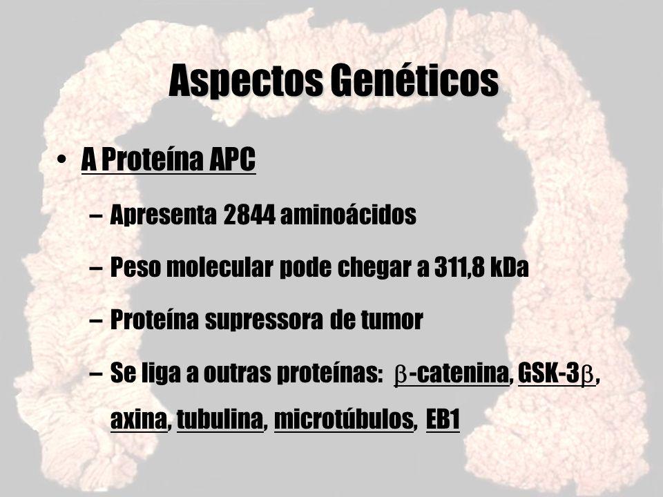 Aspectos Genéticos A Proteína APC Apresenta 2844 aminoácidos