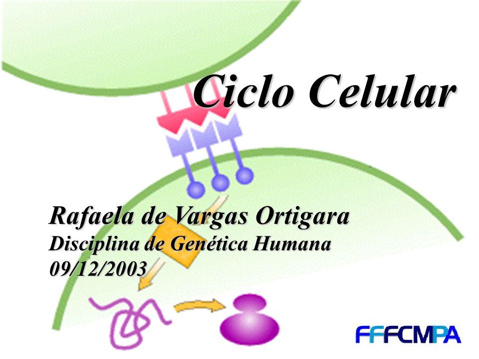 Ciclo Celular Rafaela de Vargas Ortigara Disciplina de Genética Humana