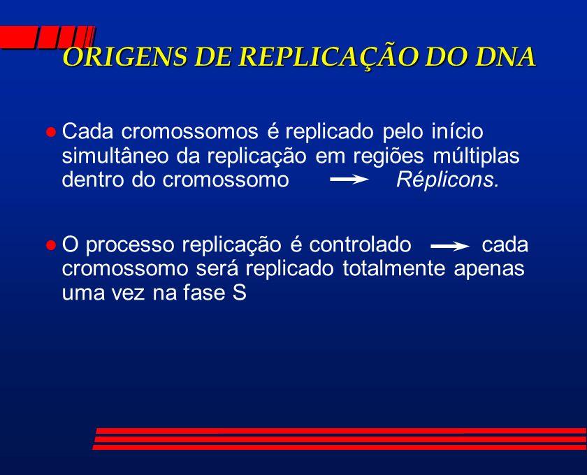 ORIGENS DE REPLICAÇÃO DO DNA