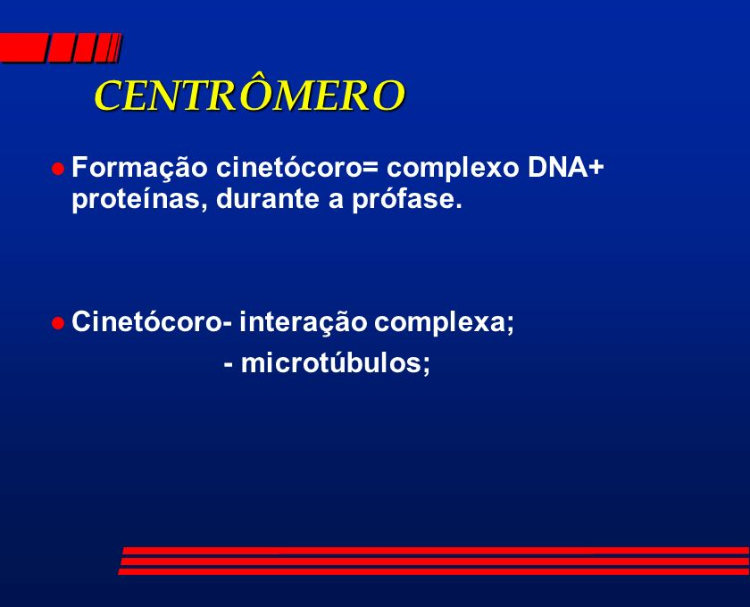 CENTRÔMEROFormação cinetócoro= complexo DNA+ proteínas, durante a prófase. Cinetócoro- interação complexa;
