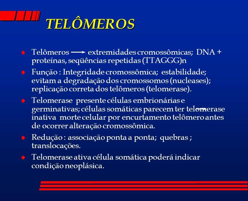 TELÔMEROS Telômeros extremidades cromossômicas; DNA + proteínas, seqüências repetidas (TTAGGG)n.