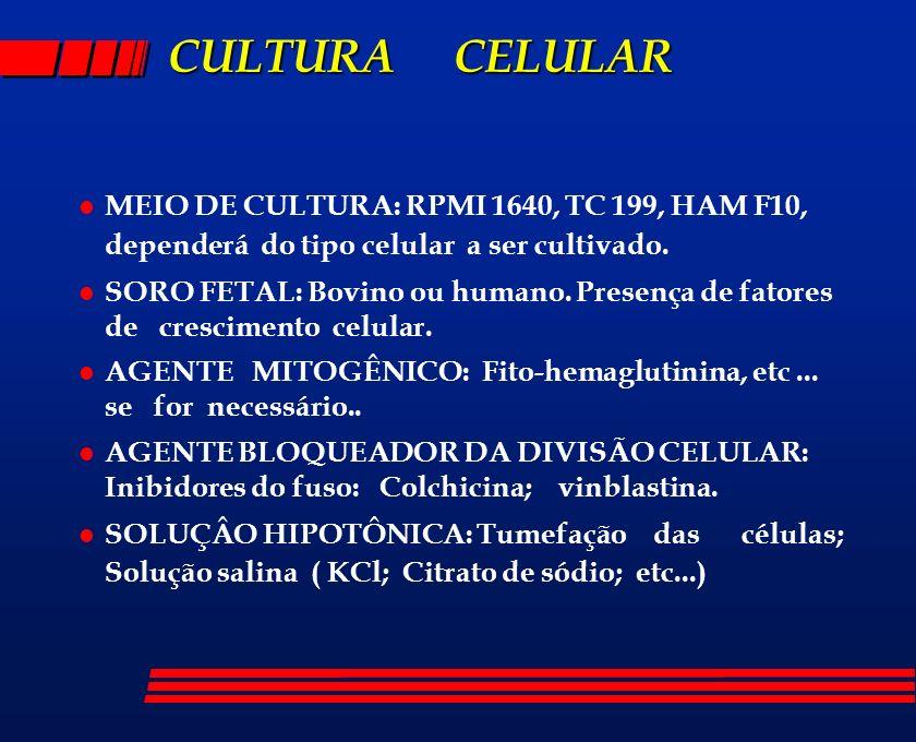 CULTURA CELULAR MEIO DE CULTURA: RPMI 1640, TC 199, HAM F10, dependerá do tipo celular a ser cultivado.
