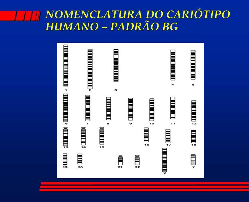 NOMENCLATURA DO CARIÓTIPO HUMANO – PADRÃO BG
