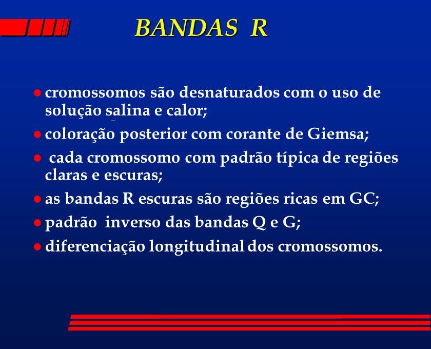 BANDAS Rcromossomos são desnaturados com o uso de solução salina e calor; coloração posterior com corante de Giemsa;