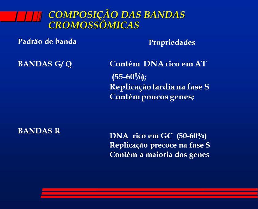COMPOSIÇÃO DAS BANDAS CROMOSSÔMICAS