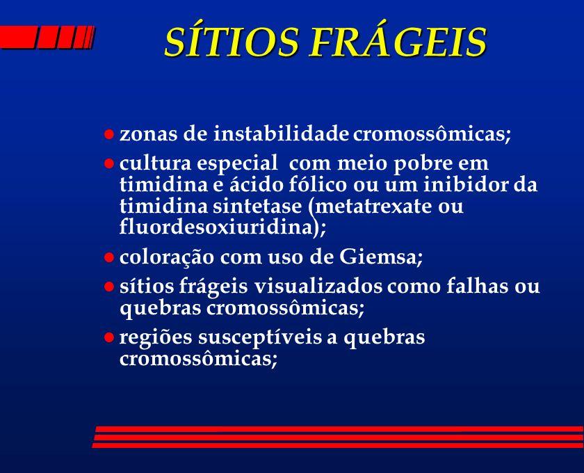 SÍTIOS FRÁGEIS zonas de instabilidade cromossômicas;