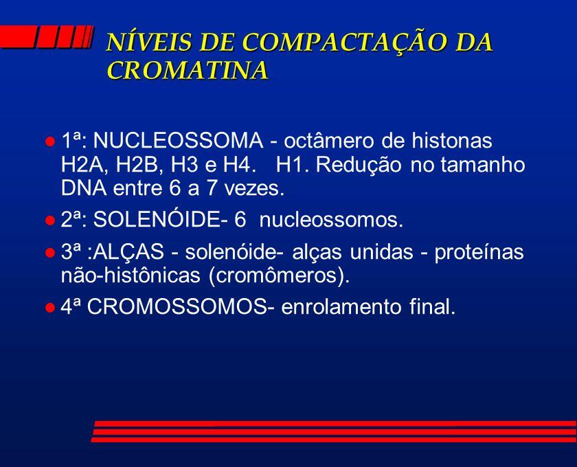 NÍVEIS DE COMPACTAÇÃO DA CROMATINA