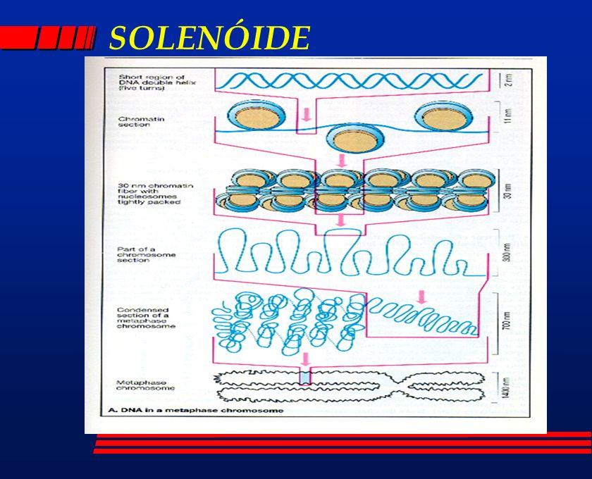 SOLENÓIDE