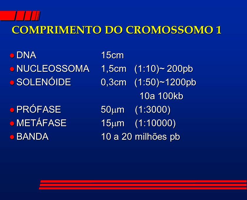 COMPRIMENTO DO CROMOSSOMO 1