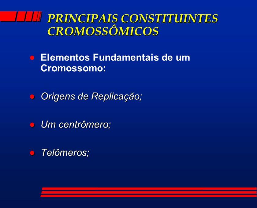 PRINCIPAIS CONSTITUINTES CROMOSSÔMICOS