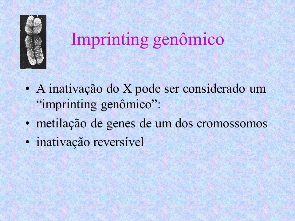 Imprinting genômico A inativação do X pode ser considerado um imprinting genômico : metilação de genes de um dos cromossomos.