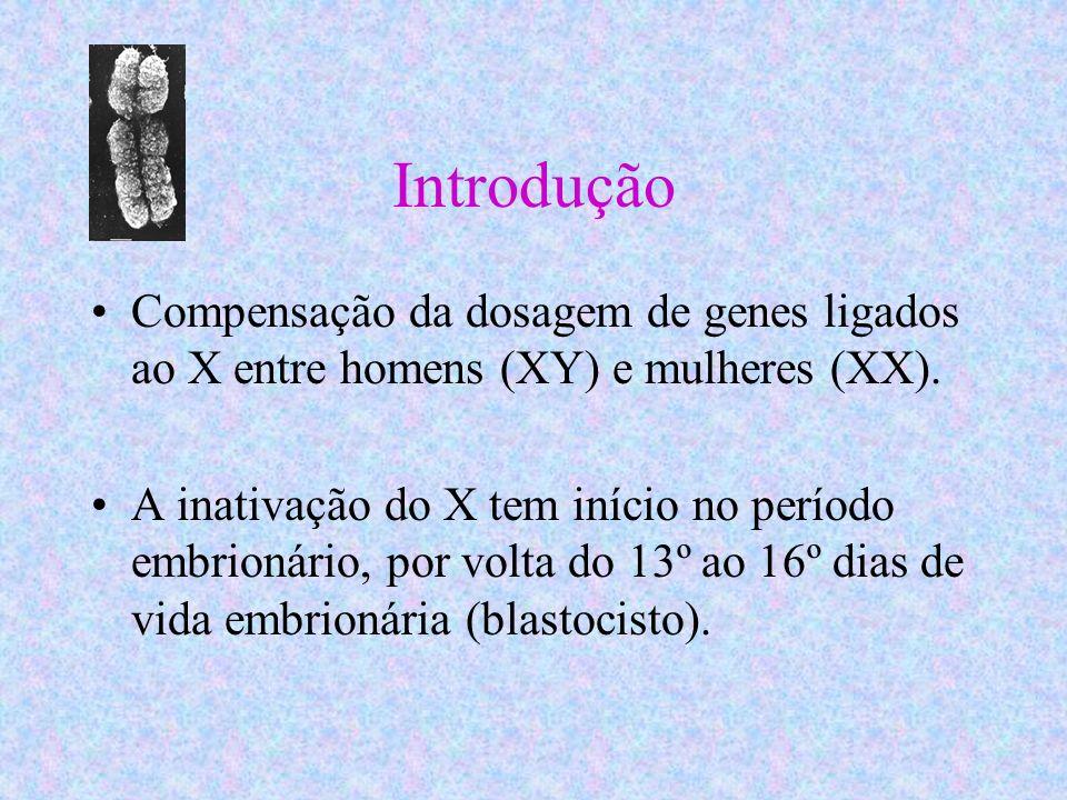 Introdução Compensação da dosagem de genes ligados ao X entre homens (XY) e mulheres (XX).
