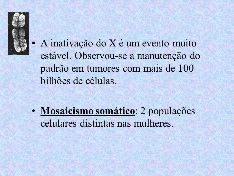 A inativação do X é um evento muito estável