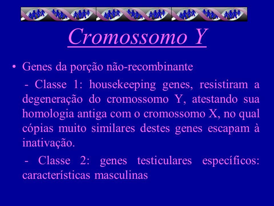 Cromossomo Y Genes da porção não-recombinante