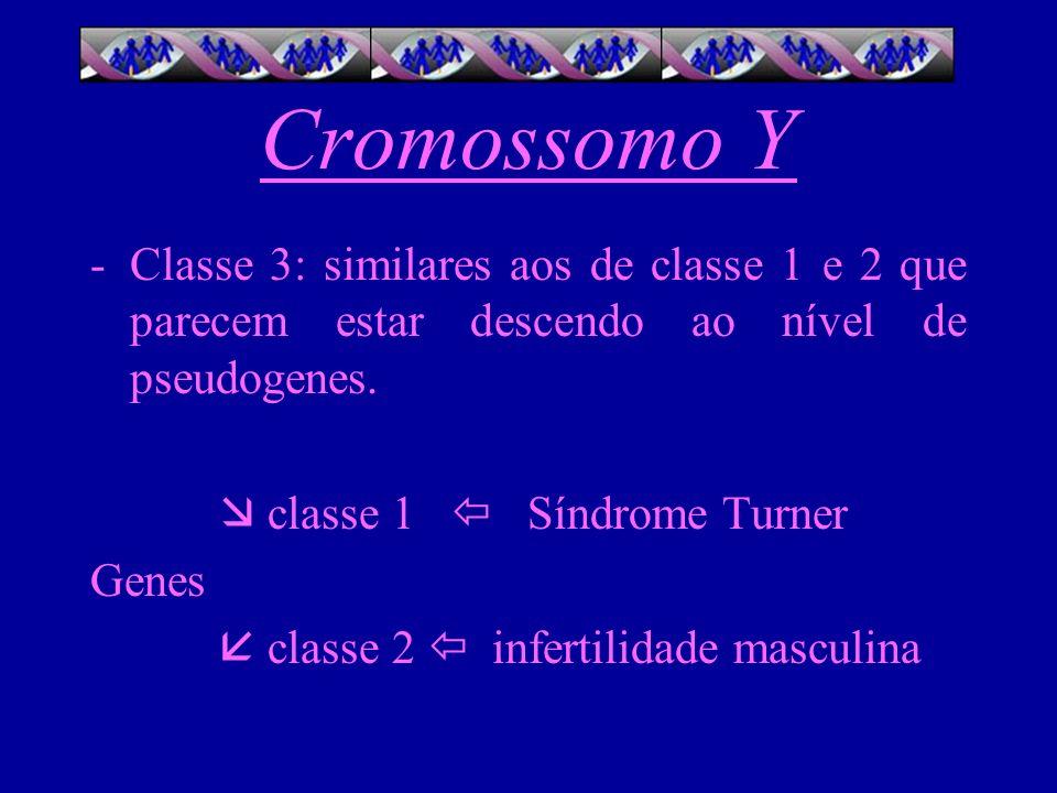 Cromossomo Y Classe 3: similares aos de classe 1 e 2 que parecem estar descendo ao nível de pseudogenes.