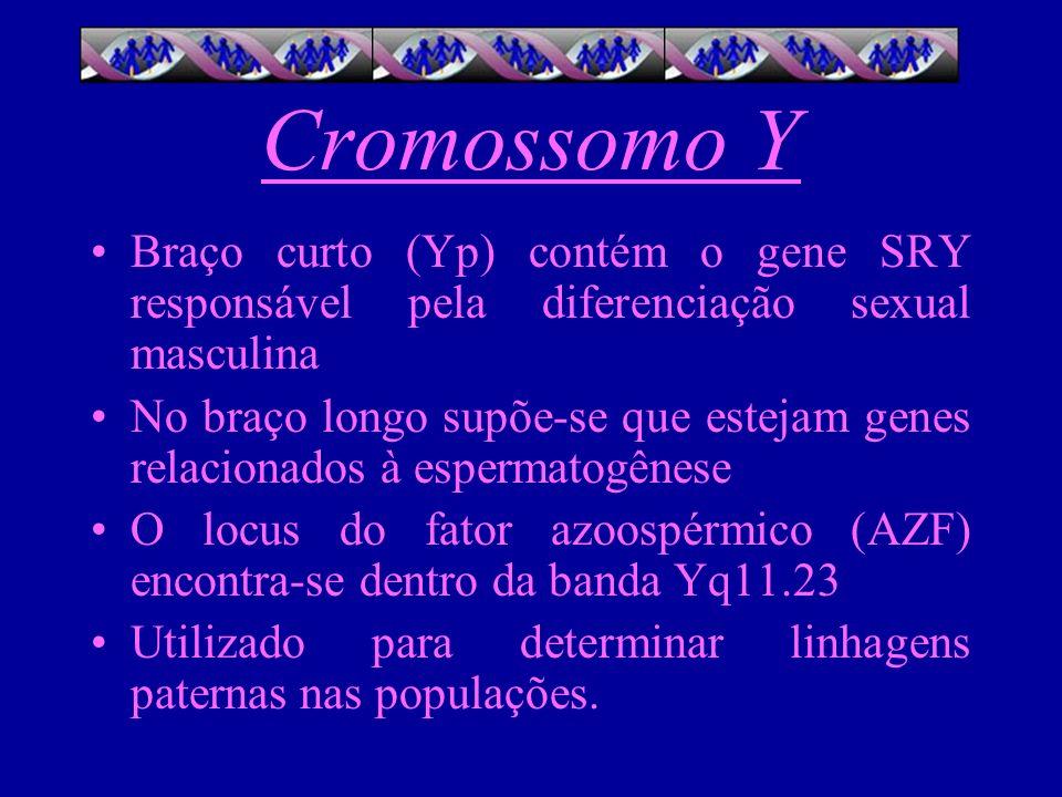 Cromossomo Y Braço curto (Yp) contém o gene SRY responsável pela diferenciação sexual masculina.