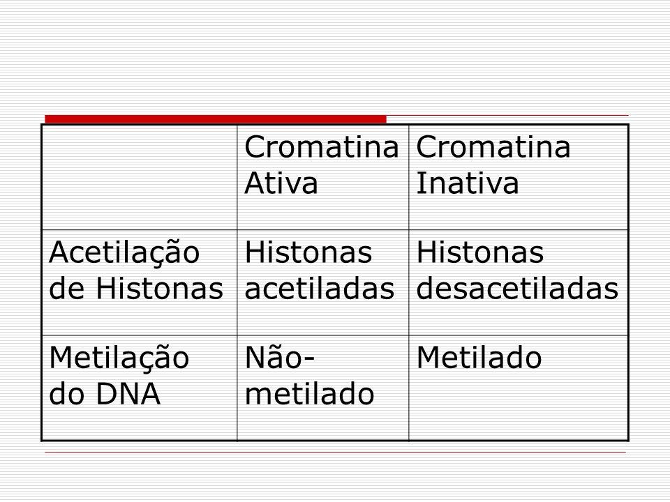 Cromatina Ativa Cromatina Inativa. Acetilação de Histonas. Histonas acetiladas. Histonas desacetiladas.