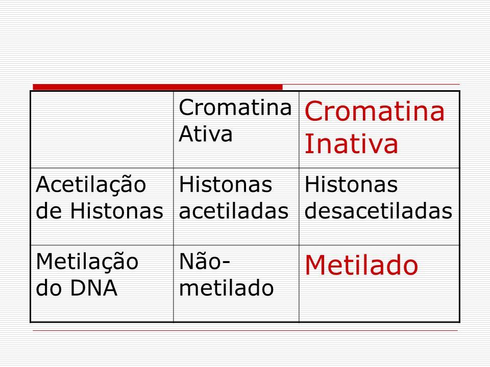 Cromatina Inativa Metilado Cromatina Ativa Acetilação de Histonas
