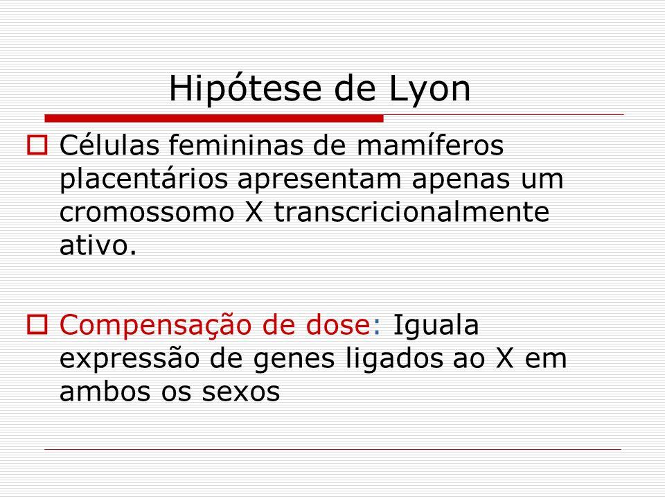 Hipótese de Lyon Células femininas de mamíferos placentários apresentam apenas um cromossomo X transcricionalmente ativo.